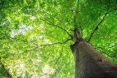 Θερινό δέντρο με τα πράσινα φύλλα Στοκ εικόνα με δικαίωμα ελεύθερης χρήσης