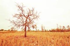 θερινό δέντρο πεδίων Στοκ Εικόνες