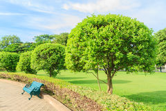 Θερινό δέντρο Στοκ Εικόνες