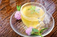 Θερινό βοτανικό τσάι με το τριφύλλι Στοκ φωτογραφία με δικαίωμα ελεύθερης χρήσης