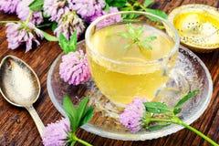 Θερινό βοτανικό τσάι με το τριφύλλι Στοκ Εικόνες