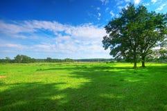 θερινό δέντρο πεδίων Στοκ εικόνες με δικαίωμα ελεύθερης χρήσης
