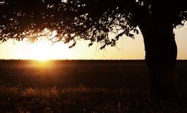 θερινό δέντρο πεδίων Στοκ Φωτογραφίες