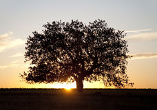 θερινό δέντρο πεδίων Στοκ φωτογραφίες με δικαίωμα ελεύθερης χρήσης