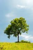 θερινό δέντρο τοπίων Στοκ εικόνα με δικαίωμα ελεύθερης χρήσης