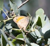 θερινό δέντρο φύσης πεταλούδων Στοκ Εικόνες