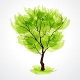 θερινό δέντρο Στοκ εικόνα με δικαίωμα ελεύθερης χρήσης