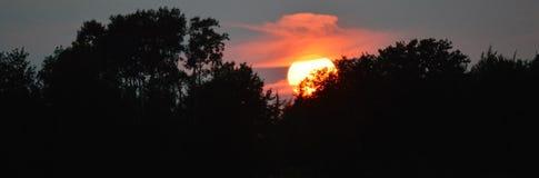 Θερινό ηλιοβασίλεμα στα δέντρα Στοκ Φωτογραφία