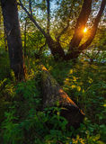 Θερινό ηλιοβασίλεμα στο δάσος Στοκ φωτογραφία με δικαίωμα ελεύθερης χρήσης