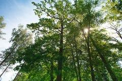 Θερινό ηλιόλουστο δάσος Στοκ εικόνες με δικαίωμα ελεύθερης χρήσης