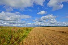 Θερινό ηλιόλουστο τοπίο με τον τομέα σιταριού στη Ρωσία Στοκ Φωτογραφίες