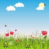 Θερινό θετικό τοπίο με τη χλόη και τα λουλούδια λιβαδιών Στοκ φωτογραφίες με δικαίωμα ελεύθερης χρήσης