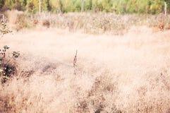Θερινό λιβάδι με την κίτρινη χλόη στοκ εικόνα