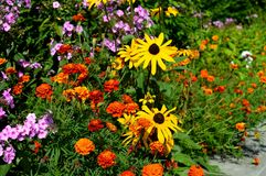 Θερινό κίτρινο flowers… στο πάρκο πόλεων λουλούδια φυσικά Στοκ φωτογραφίες με δικαίωμα ελεύθερης χρήσης