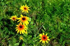 Θερινό κίτρινο flowers… στο πάρκο πόλεων λουλούδια φυσικά Στοκ Φωτογραφία