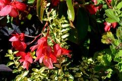 Θερινό κόκκινο flowers… στο πάρκο πόλεων λουλούδια φυσικά Στοκ φωτογραφίες με δικαίωμα ελεύθερης χρήσης