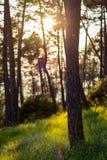 θερινό ξύλο Στοκ Φωτογραφίες