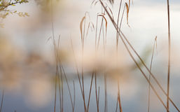 Θερινό λουλούδι Στοκ εικόνες με δικαίωμα ελεύθερης χρήσης