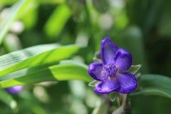Θερινό λουλούδι Στοκ φωτογραφία με δικαίωμα ελεύθερης χρήσης
