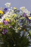 Θερινό λουλούδι Στοκ Φωτογραφία