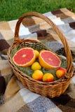 Θερινό πικ-νίκ Γκρέιπφρουτ και βερίκοκα στο καλάθι φρούτων στοκ φωτογραφία με δικαίωμα ελεύθερης χρήσης