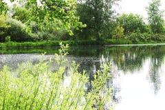 Θερινό πνεύμα Στοκ φωτογραφία με δικαίωμα ελεύθερης χρήσης