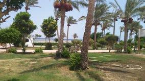 Θερινό πρωί ήλιων θάλασσας διακοπές Αίγυπτος στοκ εικόνες