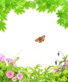 Θερινό πλαίσιο με τα πράσινα φύλλα σφενδάμου, τα λουλούδια και τα έντομα Στοκ Φωτογραφία