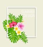 Θερινό πλαίσιο με τα τροπικά λουλούδια Στοκ Φωτογραφίες