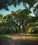 Θερινό δρύινο πάρκο Στοκ φωτογραφία με δικαίωμα ελεύθερης χρήσης