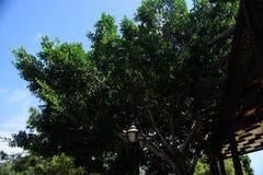 Θερινό σκοτεινό δέντρο Στοκ Φωτογραφία
