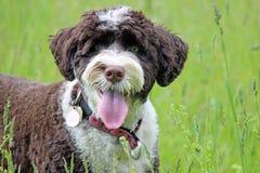 Θερινό σκυλί Στοκ Φωτογραφία
