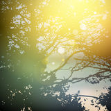 Θερινό σχέδιο, δασικά δέντρα, φυσικό πράσινο υπόβαθρο φωτός του ήλιου φύσης πράσινο ξύλινο διάνυσμα Στοκ Εικόνα