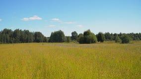 Θερινό τοπίο, ένας τομέας του λιναριού Στοκ Εικόνες