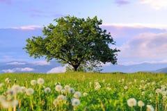 Θερινό τοπίο με κανένα δέντρο Στοκ Φωτογραφίες