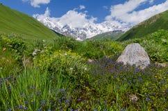 Θερινό τοπίο με μια ανθίζοντας κοιλάδα βουνών στοκ φωτογραφίες