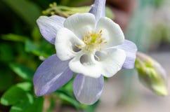 Θερινό τοπίο με τα άσπρα λουλούδια στοκ εικόνες με δικαίωμα ελεύθερης χρήσης