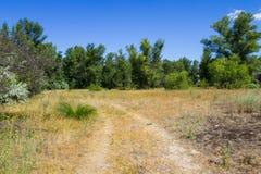 Θερινό τοπίο με τα δέντρα, το λιβάδι και το μπλε ουρανό Στοκ φωτογραφία με δικαίωμα ελεύθερης χρήσης