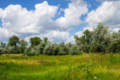Θερινό τοπίο με τα δέντρα, το λιβάδι και το μπλε ουρανό Στοκ Εικόνες