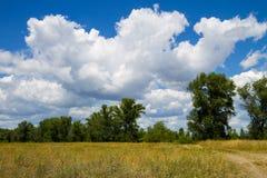 Θερινό τοπίο με τα δέντρα, το λιβάδι και το μπλε ουρανό Στοκ φωτογραφίες με δικαίωμα ελεύθερης χρήσης
