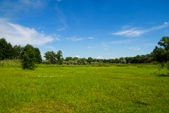 Θερινό τοπίο με τα δέντρα, το λιβάδι και το μπλε ουρανό Στοκ Φωτογραφίες