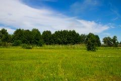Θερινό τοπίο με τα δέντρα, το λιβάδι και το μπλε ουρανό Στοκ Εικόνα