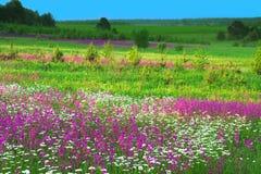 Θερινό τοπίο με τα λουλούδια σε ένα λιβάδι και ένα ηλιοβασίλεμα Στοκ Εικόνες