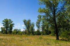 Θερινό τοπίο με τα πράσινους δέντρα, το λιβάδι και τον ουρανό Στοκ φωτογραφία με δικαίωμα ελεύθερης χρήσης
