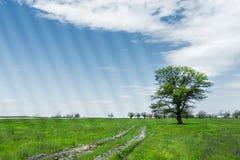 Θερινό τοπίο με την πράσινους χλόη, το δρόμο και τα σύννεφα Στοκ φωτογραφία με δικαίωμα ελεύθερης χρήσης