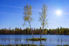 Θερινό τοπίο με τη λίμνη και τη σημύδα δύο Στοκ Εικόνα
