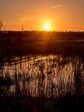 Θερινό τοπίο με τον τομέα και το δάσος Στοκ φωτογραφία με δικαίωμα ελεύθερης χρήσης