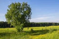 Θερινό τοπίο με το δέντρο Στοκ Εικόνα