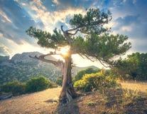 Θερινό τοπίο με το παλαιό δέντρο με τα πράσινα φύλλα Στοκ φωτογραφίες με δικαίωμα ελεύθερης χρήσης