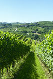 Θερινό τοπίο σε Langhe (Ιταλία) Στοκ Φωτογραφία